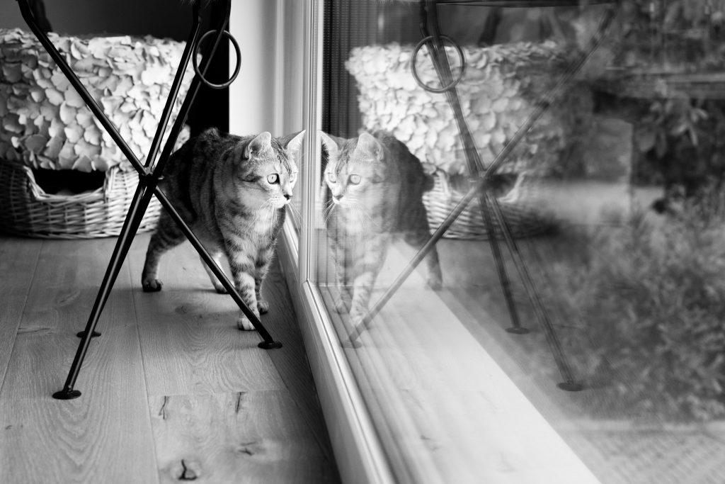 © ANDREA STEFFGEN