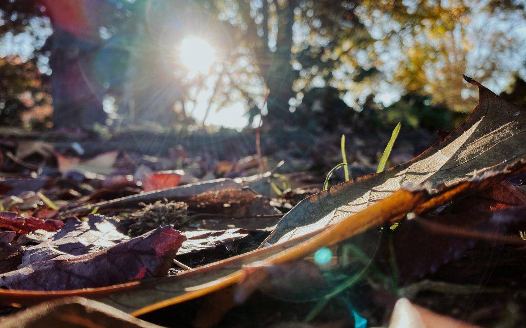Besser fotografieren lernen mit Inspiracles – Teil 1 – Fotografiere mit dem Smartphone