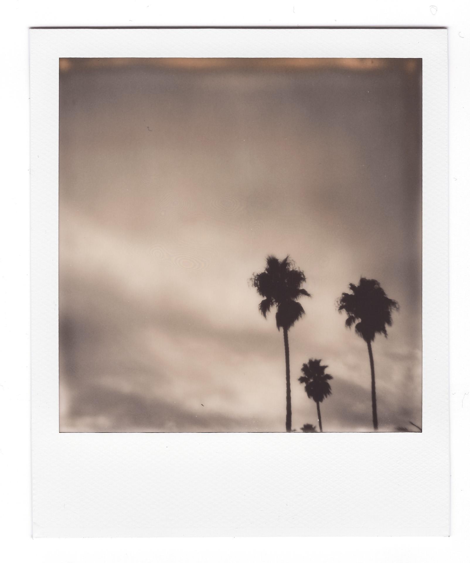 Ein Polaroid von ein paar Palmen vor einem Wolkenhimmel.