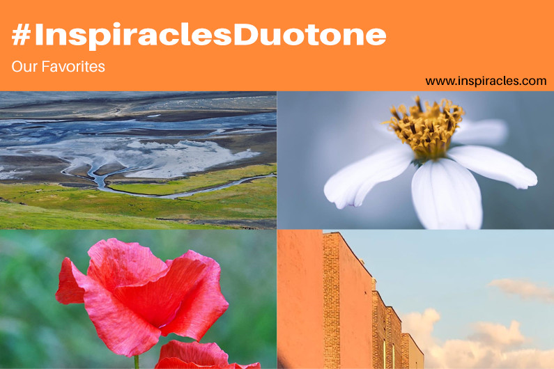 """Our favorite pictures of the August challenge """"Duotone"""" – #InspiraclesDuotone"""